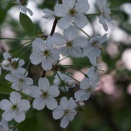 flower nature macro white
