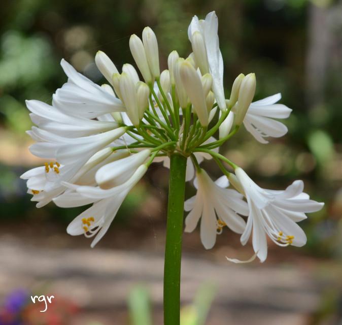 Tenerife naturaleza   #flower  #nature #photography