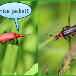 speechbubble bug silliness grid macro