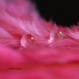 dew macro photography macrosamarinda colorsplash