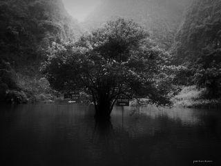 tree blackandwhite black emotion travel