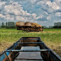 meadow hay nature