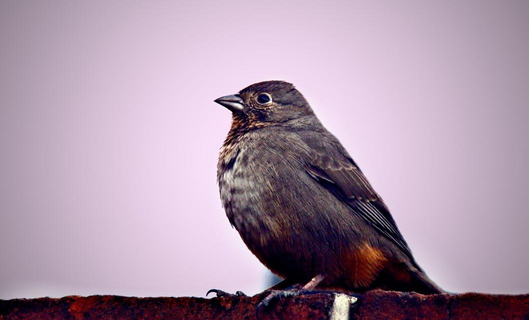 #bird  #sky  #morning  #animals  #cute  #little  #colors