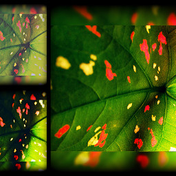 interesting art leaf leaveslovers colorful