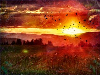 nature sunset orangesky sunspots meadow