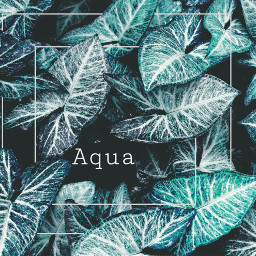 aqua edited colors leaves remix freetoedit
