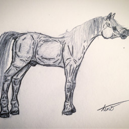 art idrew drawing horse