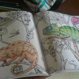 colour animal colouringbook blending pencilart