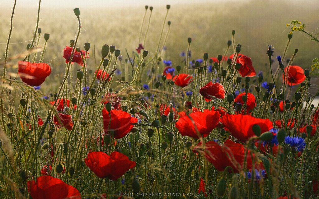 #photography  #colorful  #flower  #red #landscapes  #nature