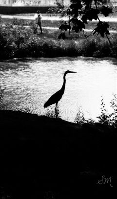 bird petsandanimals crane park pond