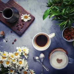 coffee coffeelower love flowers chamomile