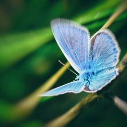 nature petsandanimals macro closeup butterfly