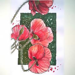 freetoedit poppy summer colorsplash nature
