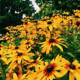 summer flowers summervibes photography