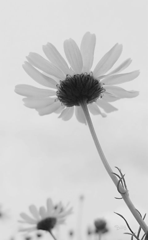 quotes flower blackandwhite nature music