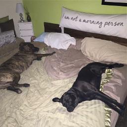 bestfriends dogs spoiledpets pets