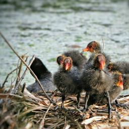 birds wildlife pond photography nature