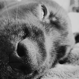 dogslife cute nose blackandwhite