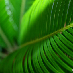 green leaf leaves nature environment freetoedit