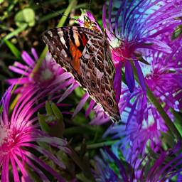 batterfly nature flower garden emotions
