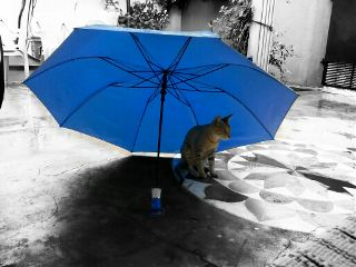 petsandanimals cat kitten catsofpicsart blue