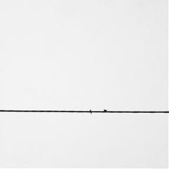 freetoedit minimalism photography bird