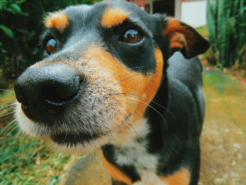 ♡   #photography  #petsandanimals #colorful #dog #canon