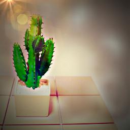 freetoedit vegetativelooks colourpower