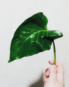 greeny freetoedit
