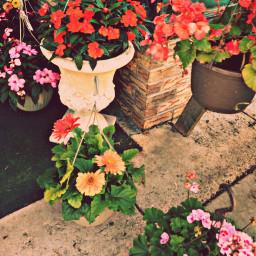 freetoedit flowers brick flowerpots vacationtrip