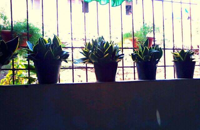 plants....at an eatery #plants #capture #edit
