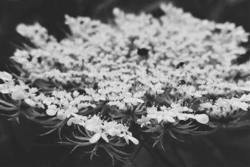 blackandwhite flower closeup nature