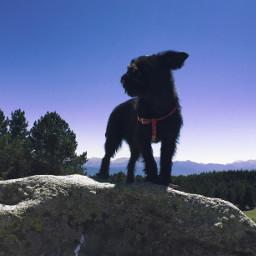 travel dog mountains nature freetoedit photography summer sky horizon pets