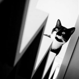 cats blackandwhite photography lamadedis tuxedocat pccats