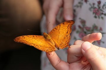 freetoedit butterfly yellow hand fingers