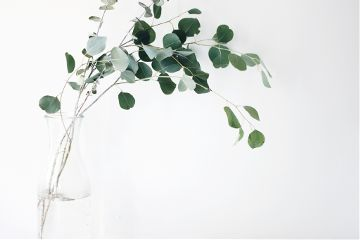 freetoedit leaves plant minimalism
