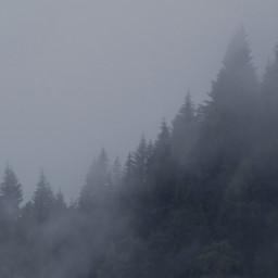 trees fogg pinetrees freetoedit nature