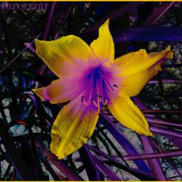 colorchangeup nettesdailyinspiration flower myphotography curvestool