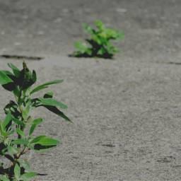minimalize nettesdailyinspiration photography weed concret