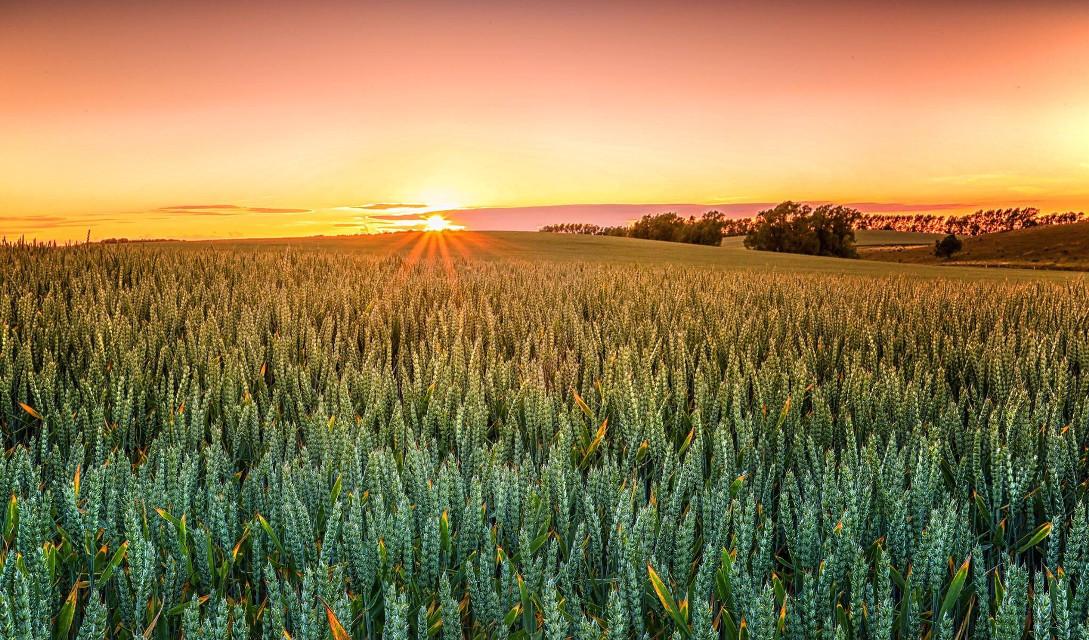 Into the great wide open   Rügen, Baltic sea  #landscape landscape #landscapephotography #landscape_captures #landscape_lovers #naturephotograp