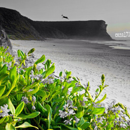 beachvibes beachview colorsplash cliparttouch green freetoedit