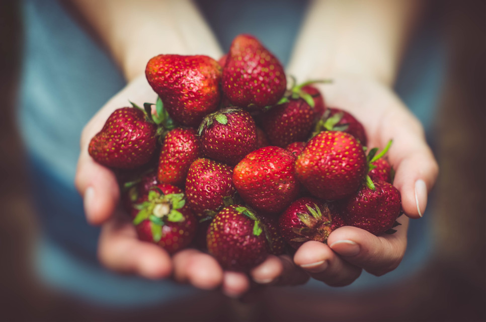 Strawberry fields forever. Your creativity has no limits. Try remixing!  Unsplash (Public Domain)  #FreeToEdit #strawberry #strawberries #red #delicious #fruit #hands