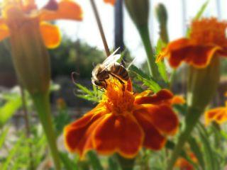 freetoedit colorful nature honeybee