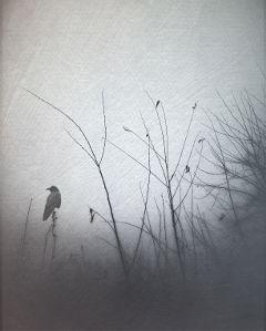 fog texture blackandwhite nature clipart