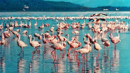 freetoedit pink flamingo water lake