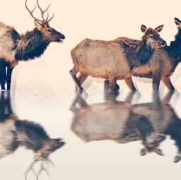freetoedit deers deerseason