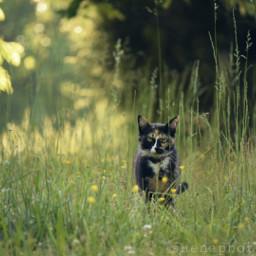 freetoedit nature cat petsandanimals perspective