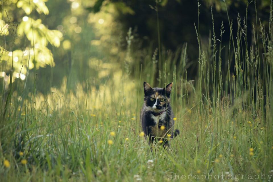 What a wonderful life.. 😺  #FreeToEdit #nature #cat #petsandanimals #perspective #pet #green #photography