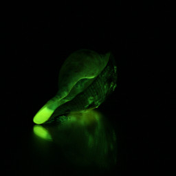 glowinthedark shell green stilllife photography reflection